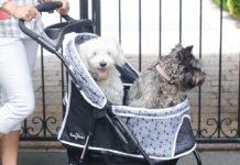 passeggini cane piu venduti