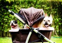 passeggino cane tipi e motivi